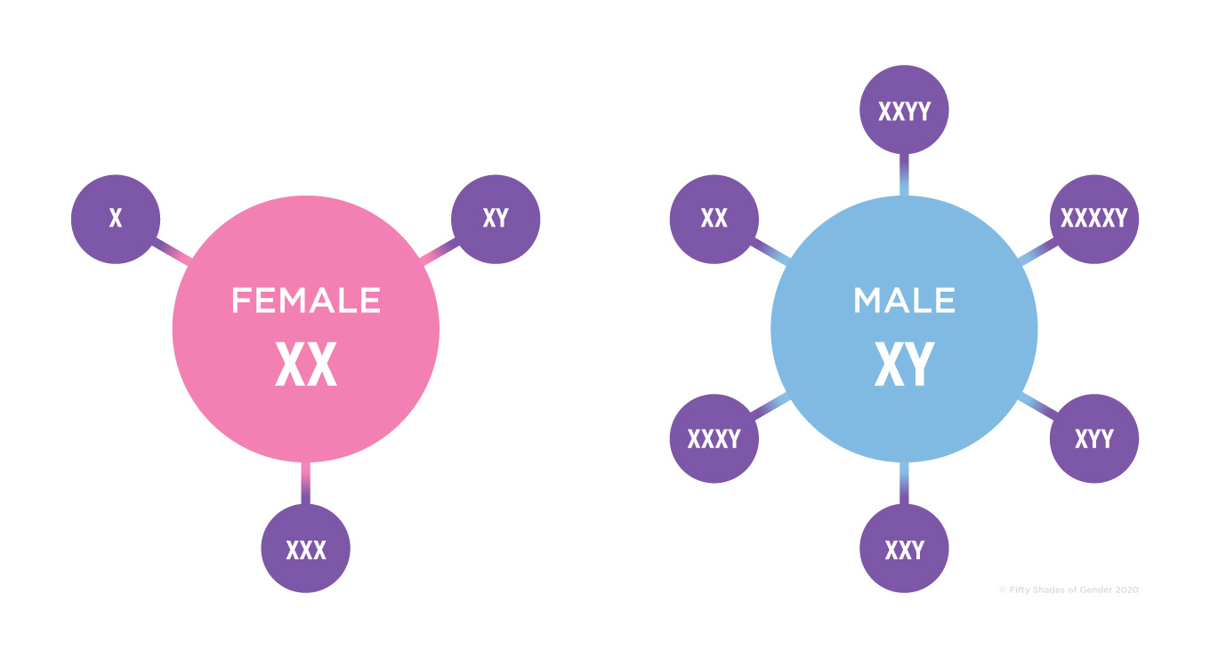 Visual representation of chromosomal varieties in males and females